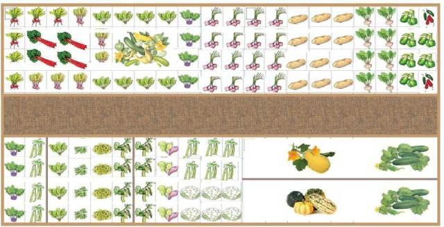 10 x 20 Garden Plan