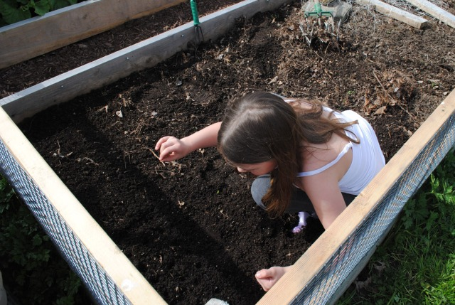 Planting two squares of radishes