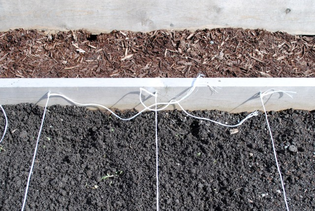 Making the garden grid with twine