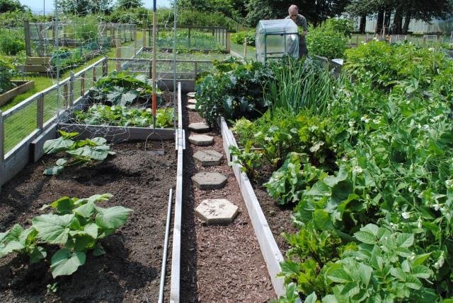 Garden Plot - south view