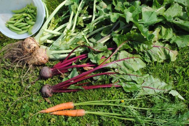 July 7 Harvest