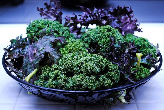 Winter Kale Harvest